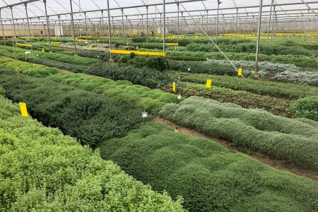 Why are herbs difficult to obtain?